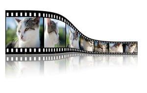 Videoschnitt leicht gemacht: mit der passenden Software kein Problem