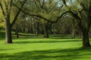 Ein grüner Park im Frühling